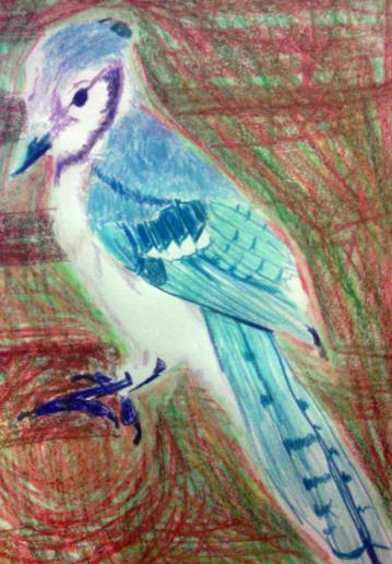 """Blue Jay Bird, 9""""X12"""", Color Pencil and Color Stick"""