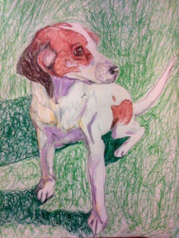 """Dog Pose, 12""""X18"""", Color Pencil and Ink"""