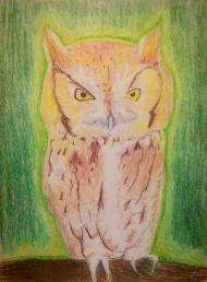 eastern-screech-owl-6